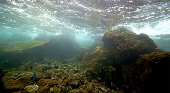 La Mar Salao protección océanos