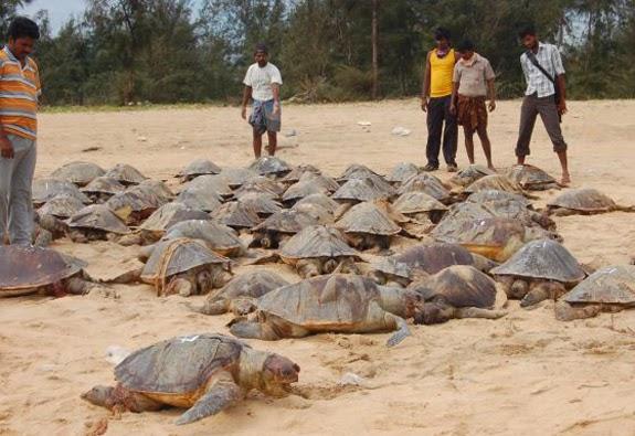 La mar salao tortugas y delfines muertos