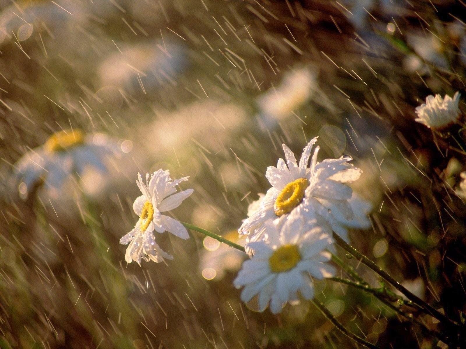 lluvia primavera