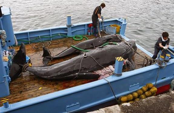 La Mar Salao freno caza ballenas