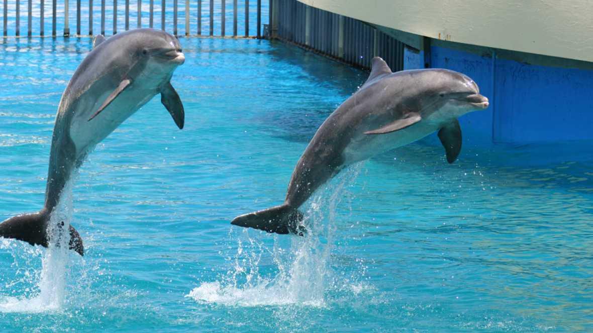 La Mar Salao Delfines en acuario