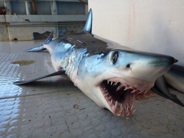 La Mar Salao ADN Tiburón