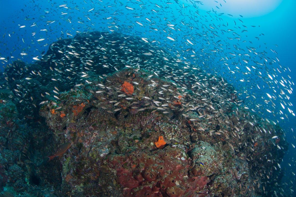 La Mar Salao Arrecife Coral