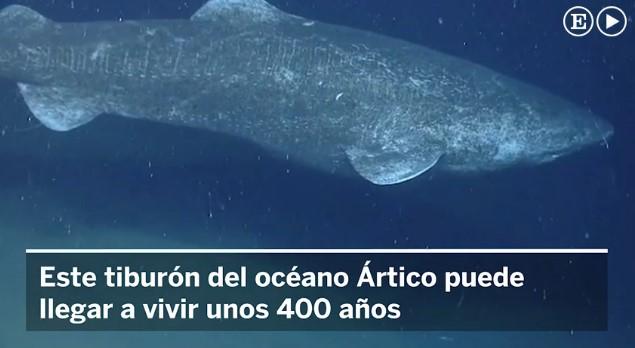 La Mar Salao tiburón