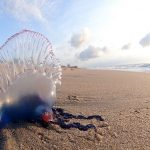 la mar salao medusas