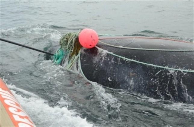 La Mar Salao ballena franca