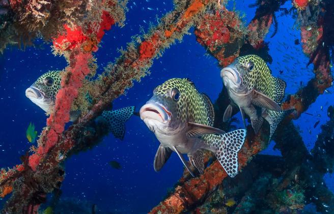 la mar salao canto peces