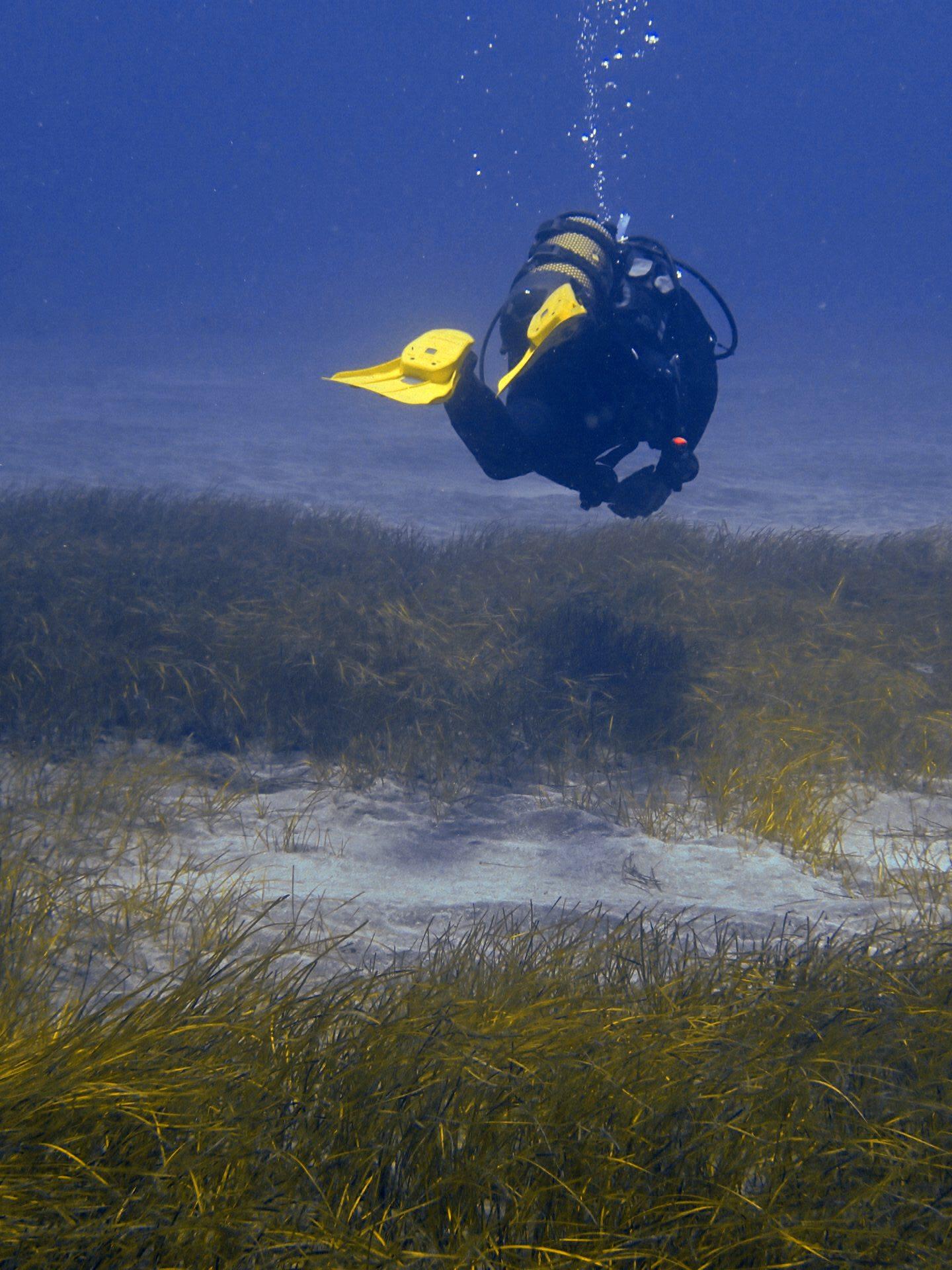 la mar salao especie en peligro seba