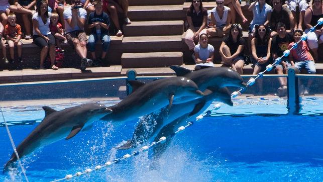 la mar salao espectaculos delfines