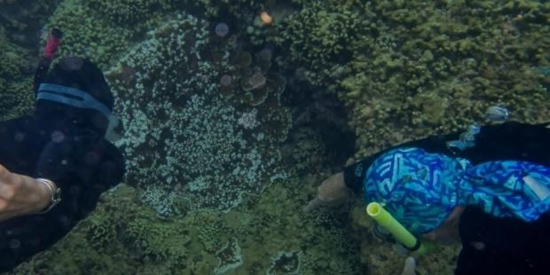 la mar salao arrecife danado