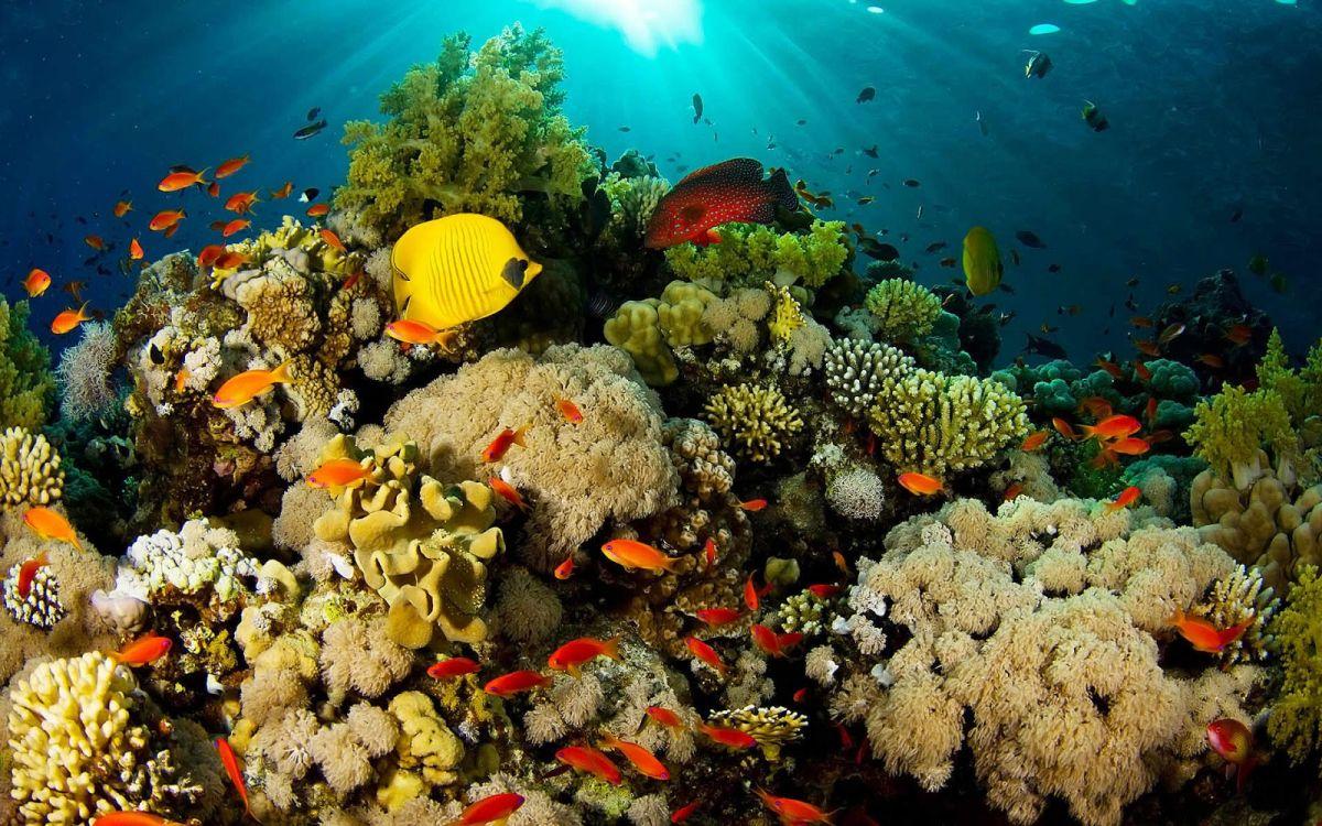 la mar salao corales 3d
