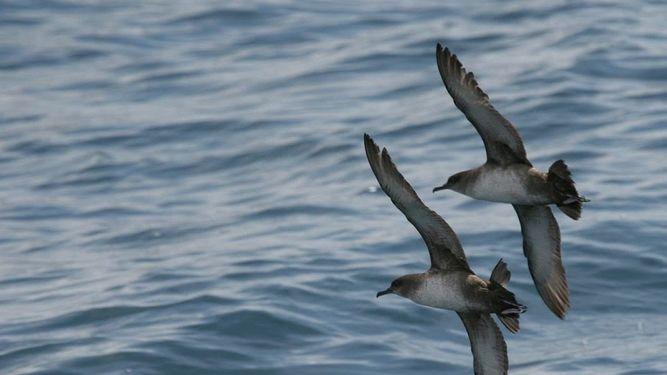 la mar salao area marina protegida