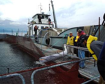 la mar salao granja acuicola marina