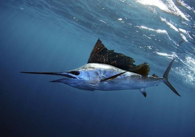 la mar salao pez espada