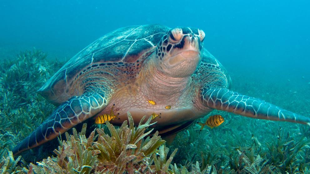 la mar salao tortugas praderas marinas