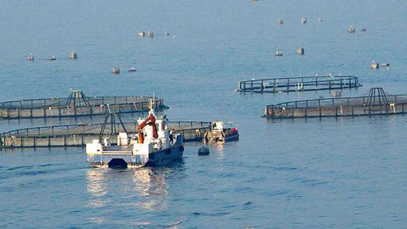 la mar salao culmarex