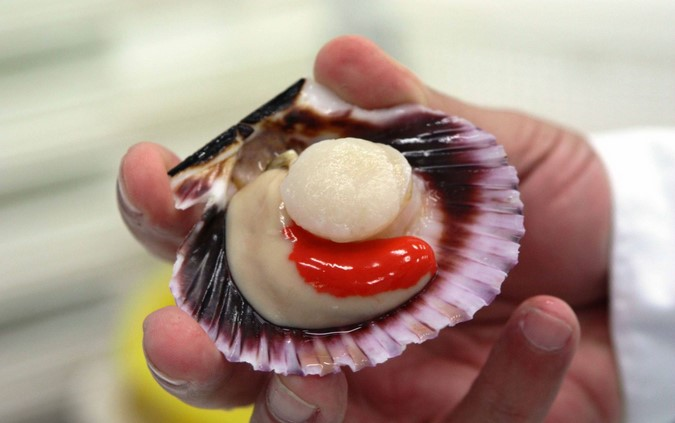 la mar salao acuicultura concha abanico