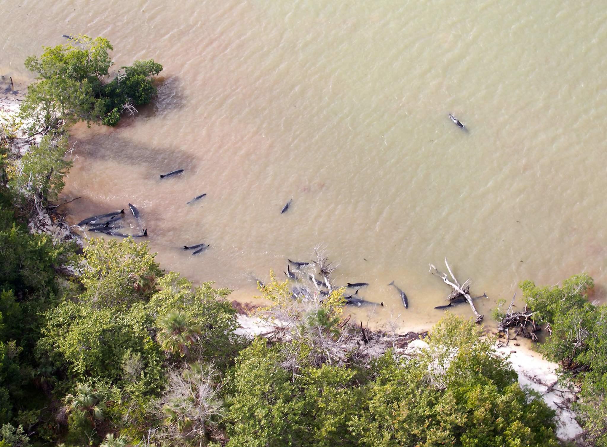 La Mar Salao Varamiento Delfines Florida