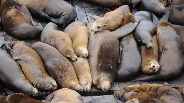 La Mar Salao alteracion ecosistema marino