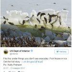 La Mar Salao peces congelados