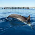 La Mar Salao Relacion Acuicultura Cetaceos
