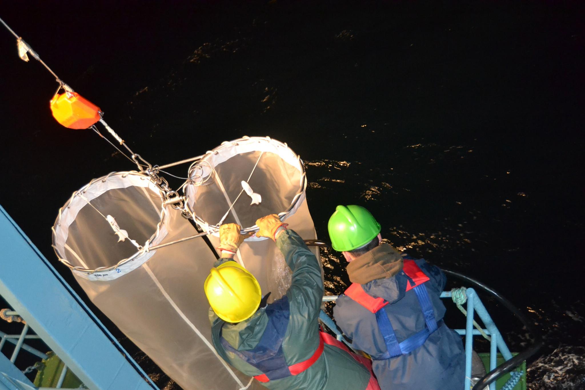 La Mar Salao reproduccion merluza europea