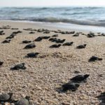 La Mar Salao tortugas golfinas
